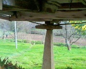 Vista de la plantación de arándanos y manzanos desde debajo del hórreo